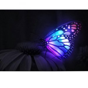 Canvas Led Valotaulu Butterfly